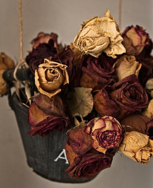 Roses 1 by konig