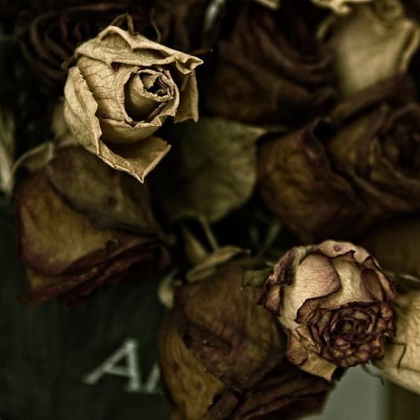 Roses 3 by konig