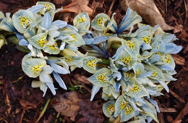 Woodland Bouquet by adagio