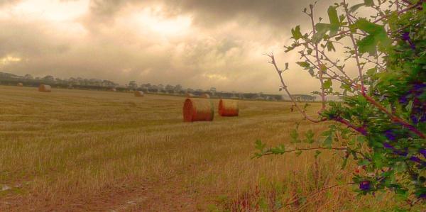 Hay Bales, near Eyemouth, Berwickshire. by Pinarellopete