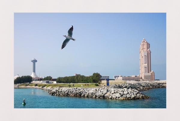 Abu Dhabi Seagull by sidcollins