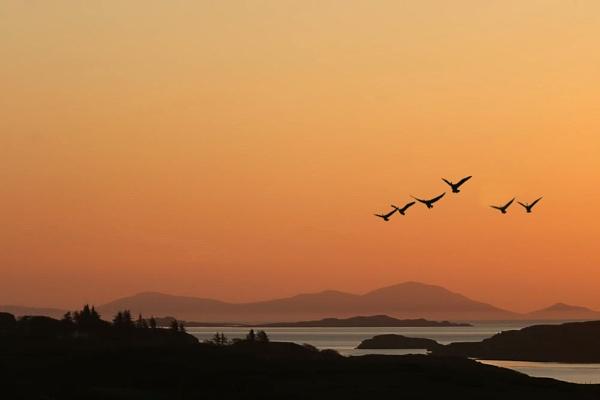 Geese over Skye by sandwedge
