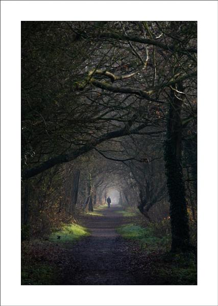 Trail Light by Steve-T