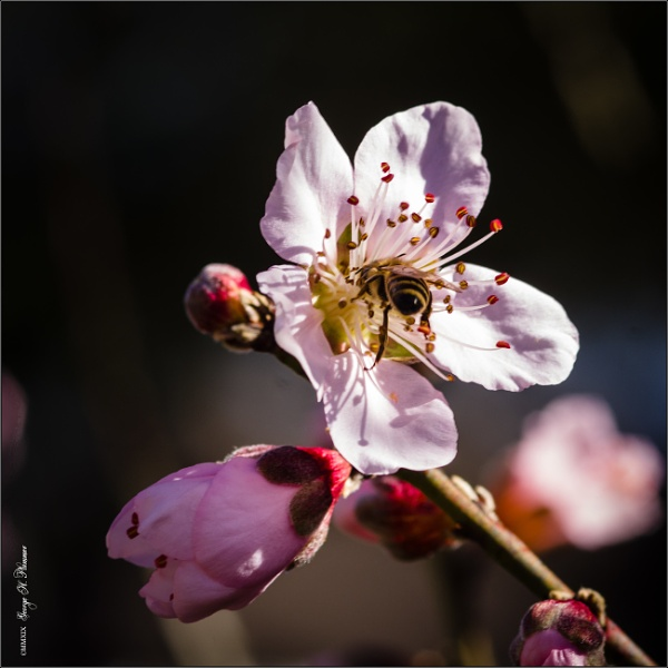 Bee loud glade by GeorgeP