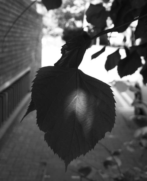 Untitled by dannyr