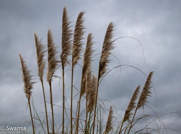 Windy Day...