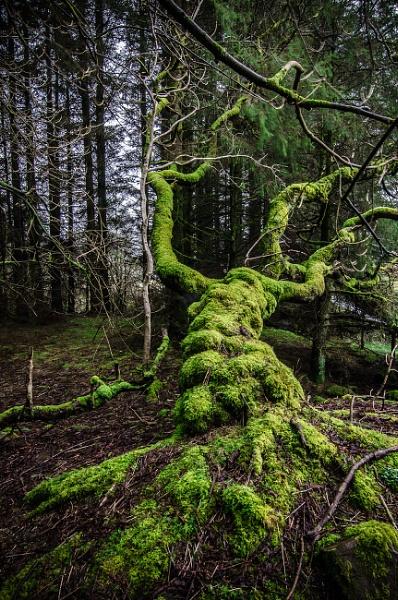 spooky tree by rocky41