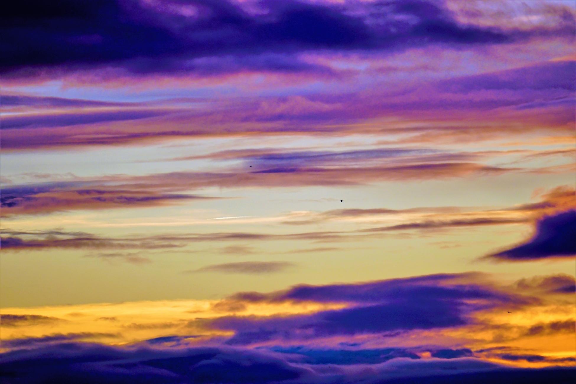 Lone bird.