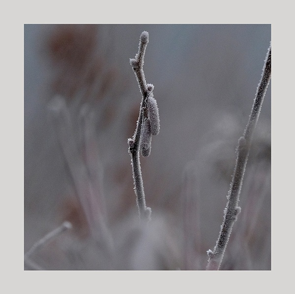 Winter hedgerow 3