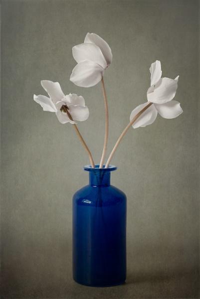 Cyclamen in a Blue Vase by flowerpower59