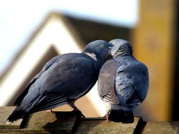 Love is in the air by DerekHollis