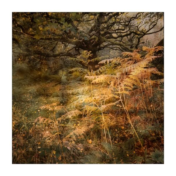 Bracken and Oak by gerainte1