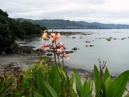 Bay of Plenty. NZ