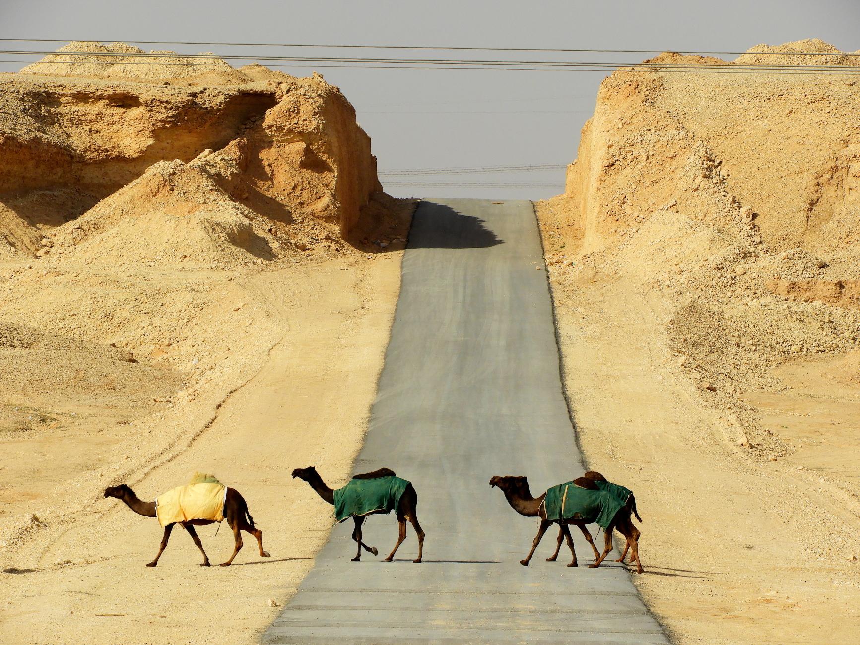 In the Desert : 4