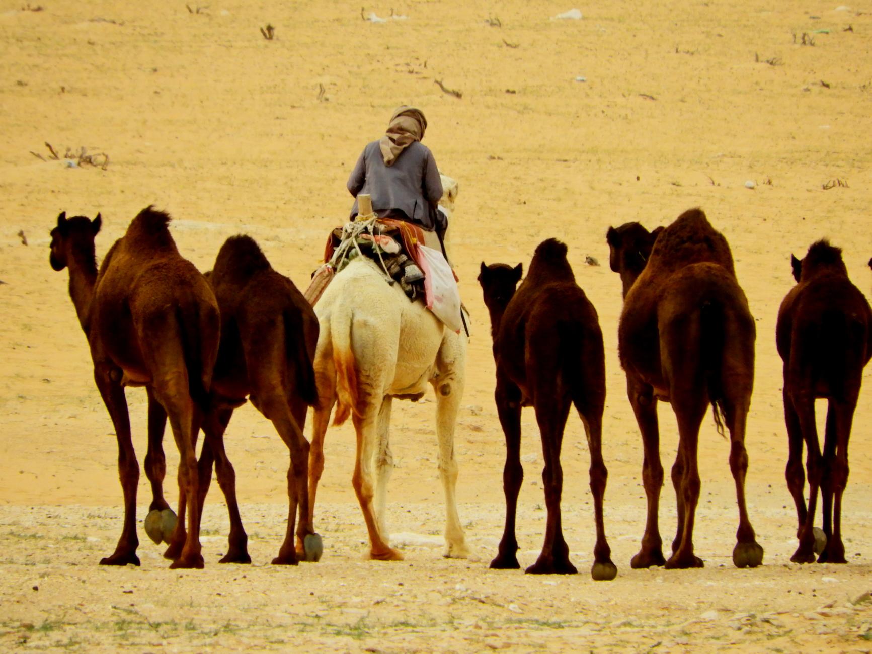 In the Desert: 6
