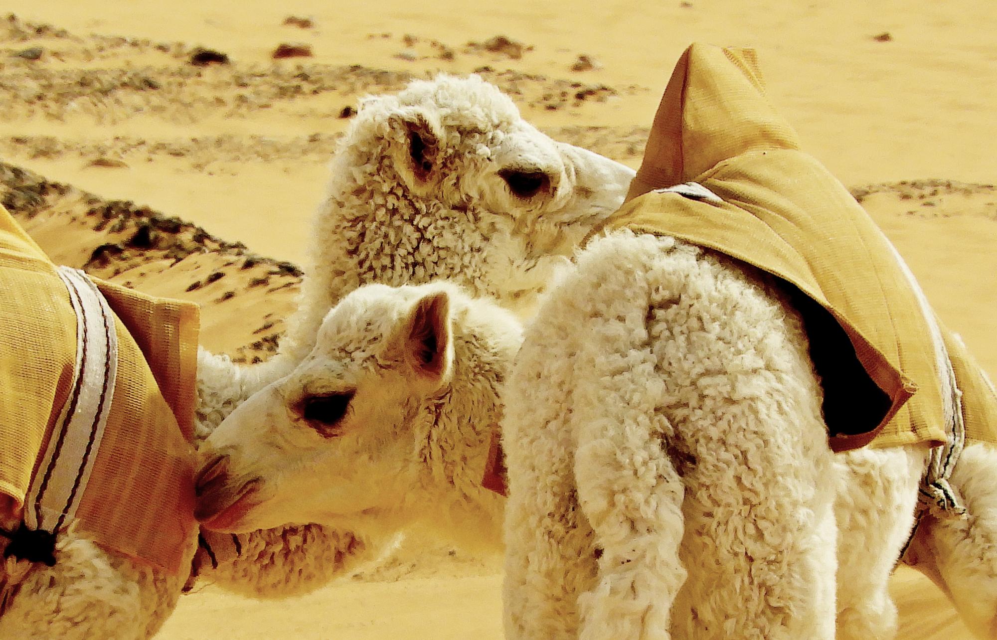In the desert : 7