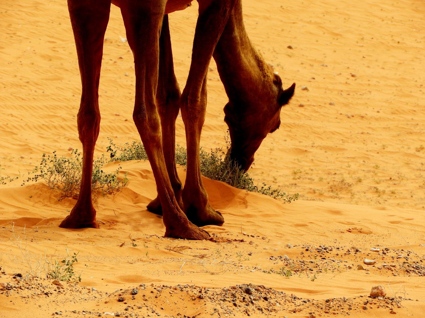 In the Desert: 8