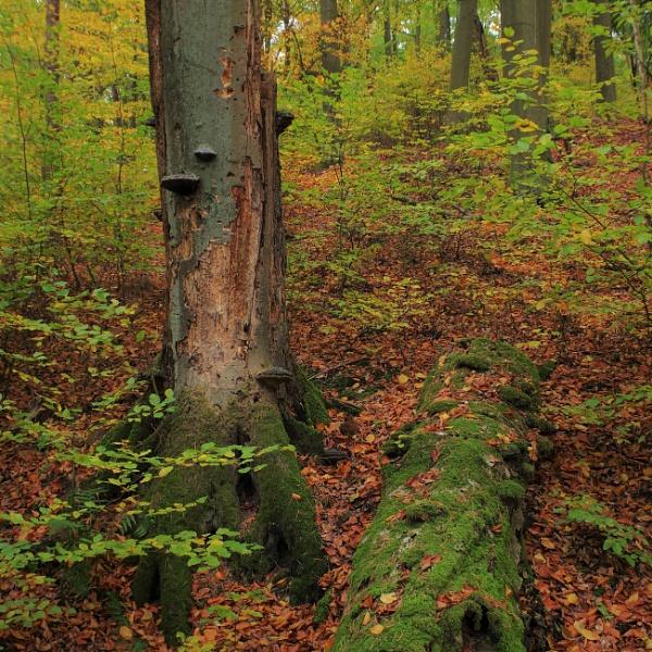 Autumnal Gleam Series #88 by PentaxBro
