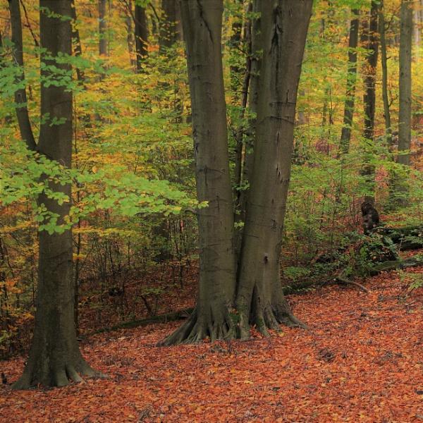 Autumnal Gleam Series #79 by PentaxBro