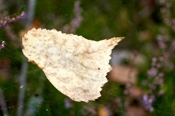 Fall by LotaLota