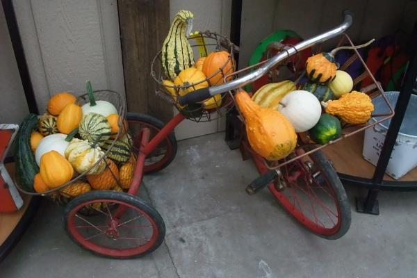 pumpkin trike by MentorRon