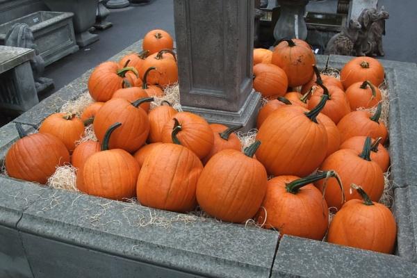 pumpkins by MentorRon