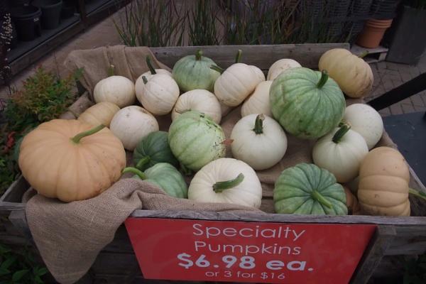 Pastel Pumpkins by MentorRon