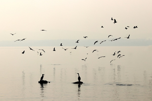 Seagulls and co by Meletis