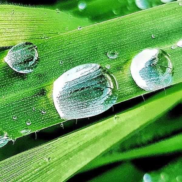 Water drops by VNuss