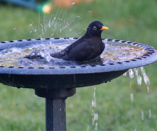 Splish Splash by rightsaidfred