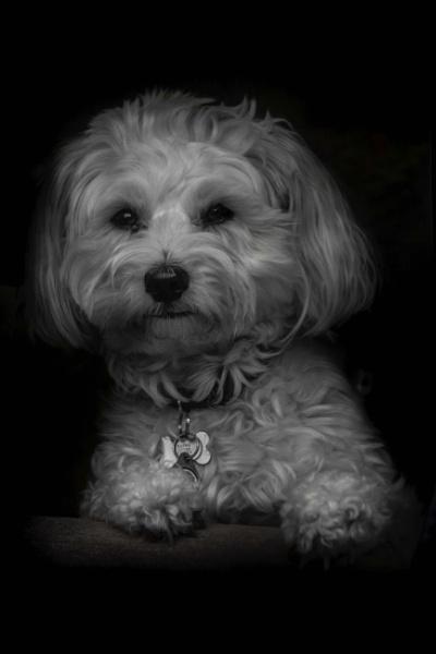 Good Puppy by fossie1955