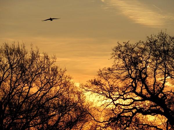 Sunrise by SUE118