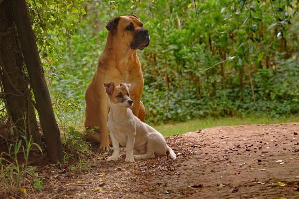 Bathurst Dogs