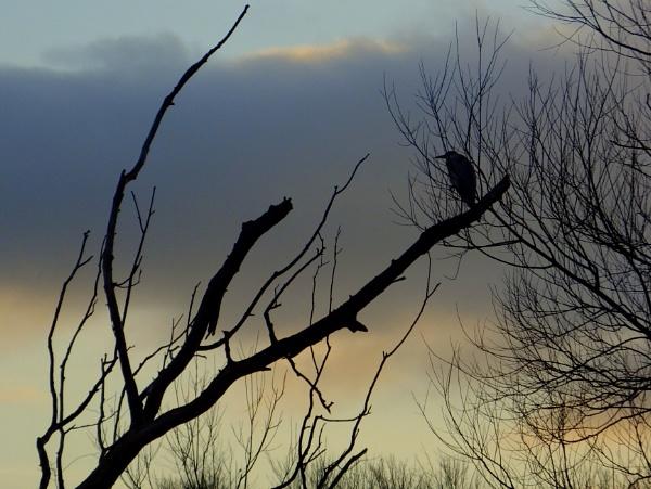 Heron at Sunset by ianmoorcroft