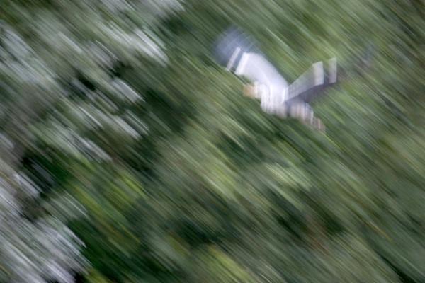 Flight of the Heron by awmcdonald