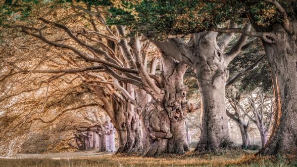 Beech tree Ave by true