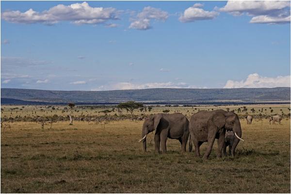 Elephants by notsuigeneris