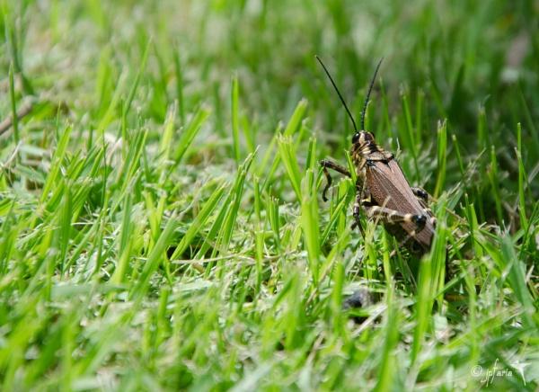 Grasshopper by Zerstorer