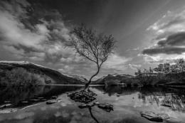 Lake Mountains and a Tree