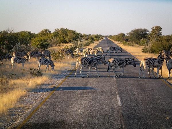 Zebra Crossing by Prizm