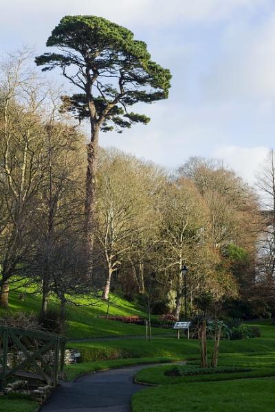 Large tree by Madoldie