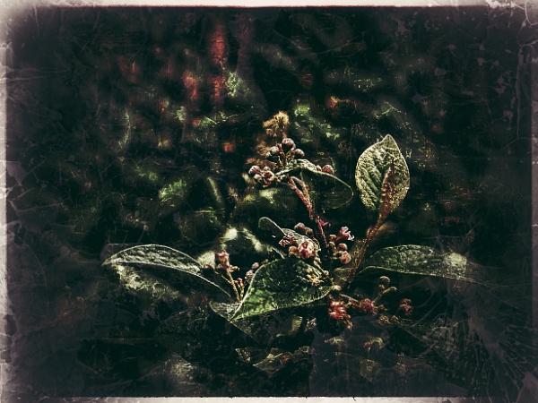 Emerging Blossom by Monochrome2004