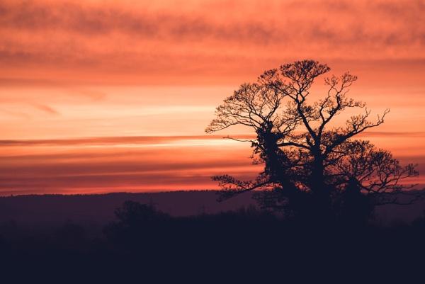The Serengeti of Buckinghamshire! by Bp122