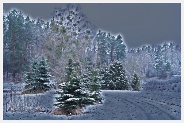WINTER GLOOM #1 by PentaxBro