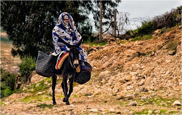 Donkey Trail by dven