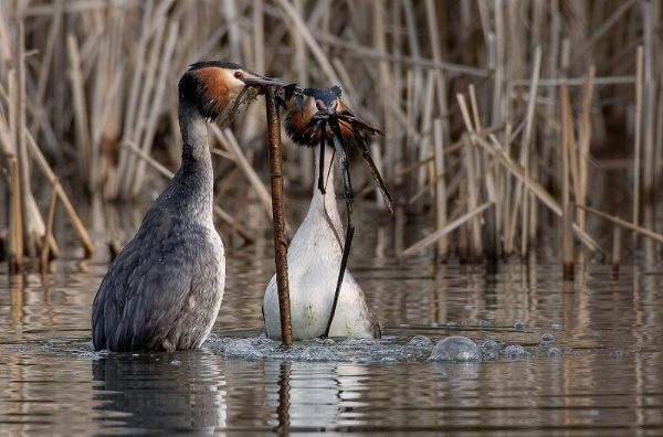 Courtship by Mike_Young
