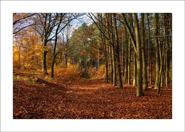Sherwood Forest - ii by Steve-T