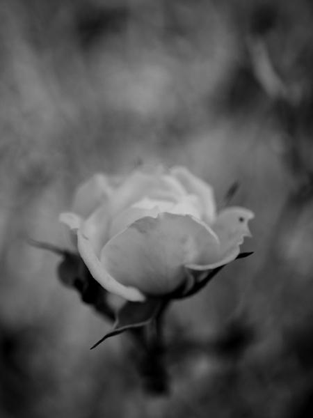 Flower by dannyr