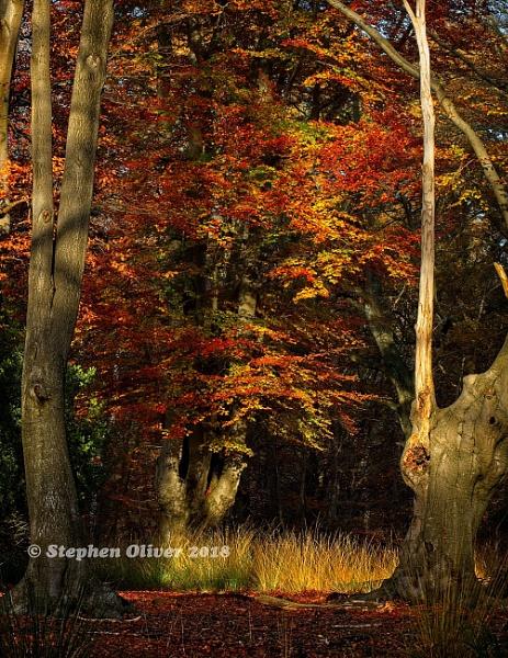Autumn Forest by barnowlman