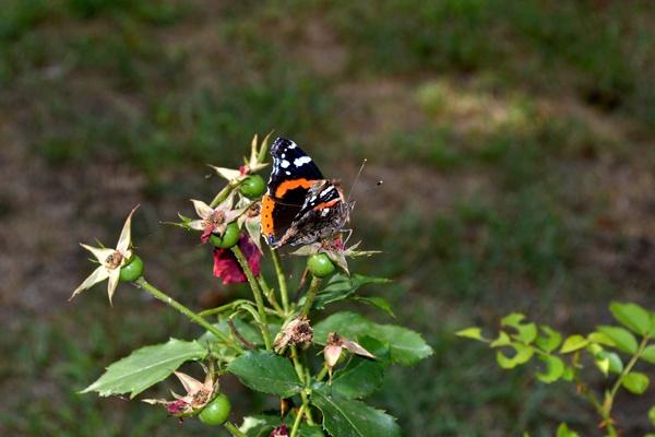 A butterfly. by Laslo